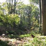 Schellenberger Wald mit NSG Hülsenhaine