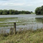 Rheinaue Walsum im Sommer