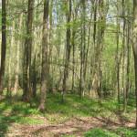 NSG Thielenbruch und Thurner Wald