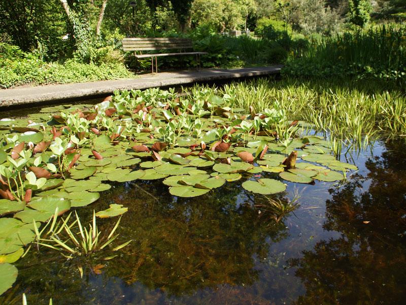 Eines der kleinen Gewässer im Botanischen Garten der RUB; Foto: 25.04.2014, Bochum-Querenburg