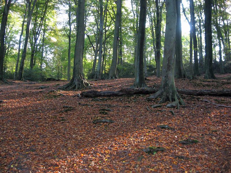 Herbstwald am Kalwes in der Nähe des Botanischen Gartens der RUB; Foto: 15.10.2007, Bochum-Querenburg
