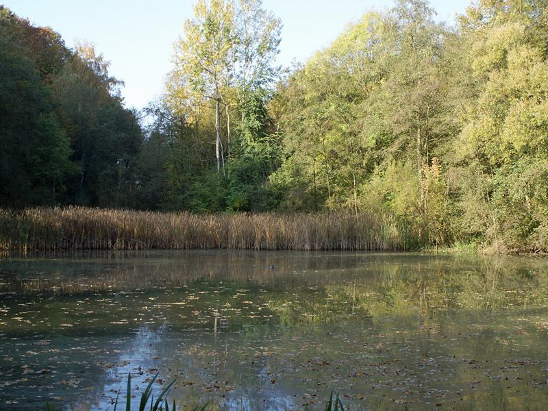 Herbststimmung am Lottentaler Teich in der Nähe des Botanischen Gartens der RUB; Foto: 15.10.2007, Bochum-Querenburg