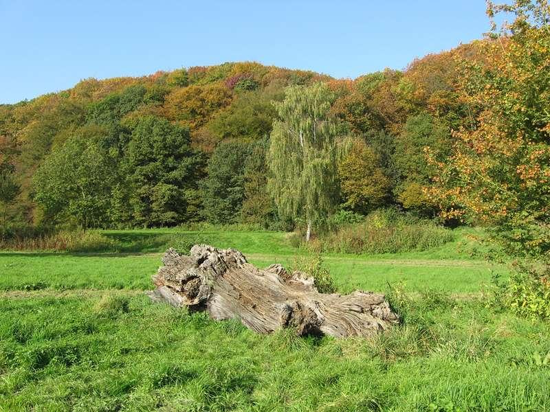 Herbstlicher Wald am nordöstlichen Ufer des Kemnader Sees; Foto: 15.10.2007, Bochum-Querenburg