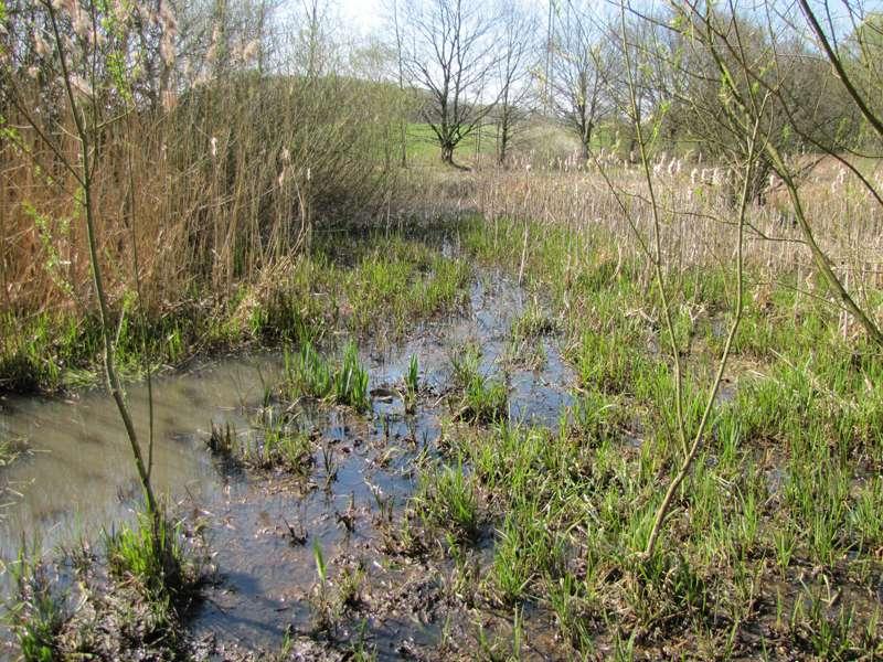 Im zeitigen Frühling sind die sumpfigen Stellen noch nicht unter dichter Vegetation versteckt; Foto: 29.03.2014, Bochum-Gerthe