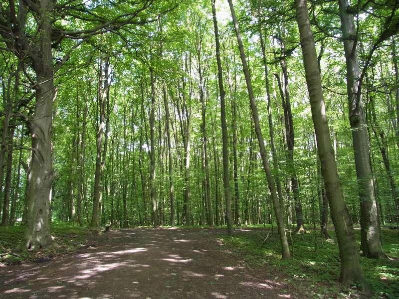 Im südlichen Teil des Naturschutzgebiets gibt es ein Waldstück; Foto: 07.06.2014, Bochum-Gerthe