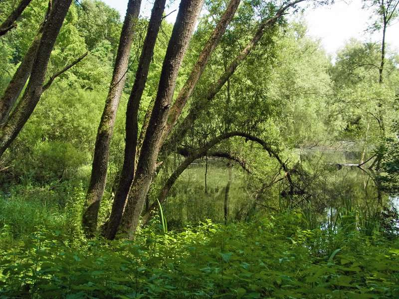 Frühlingsgrün im Naturschutzgebiet Oberes Oelbachtal; Foto: 07.06.2014, Bochum-Gerthe