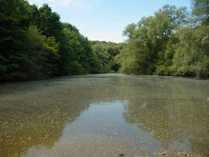 An den Gewässern im NSG Oberes Oelbachtal kommen etliche Vogelarten vor; Foto: 07.06.2014, Bochum-Gerthe