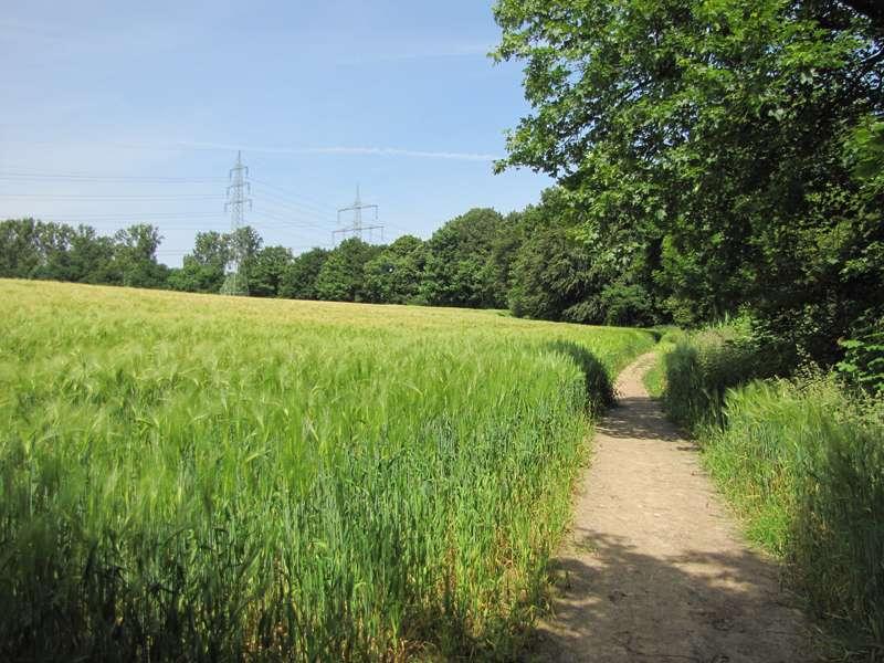 Landwirtschaftlich genutzte Flächen säumen die geschützten Abschnitte; Foto: 07.06.2014, Bochum-Gerthe