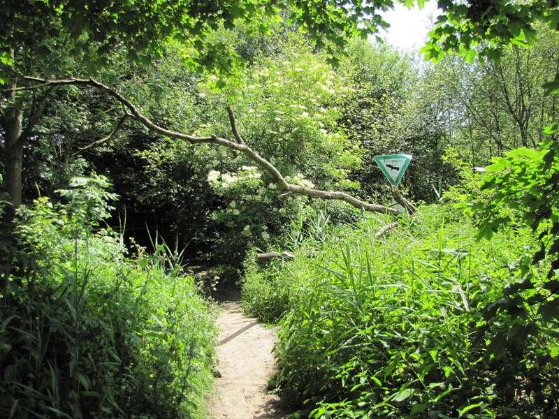 Der Zugang von der Bochumer Seite ist im Frühling nicht leicht zu erkennen; Foto: 07.06.2014, Dortmund-Bövinghausen