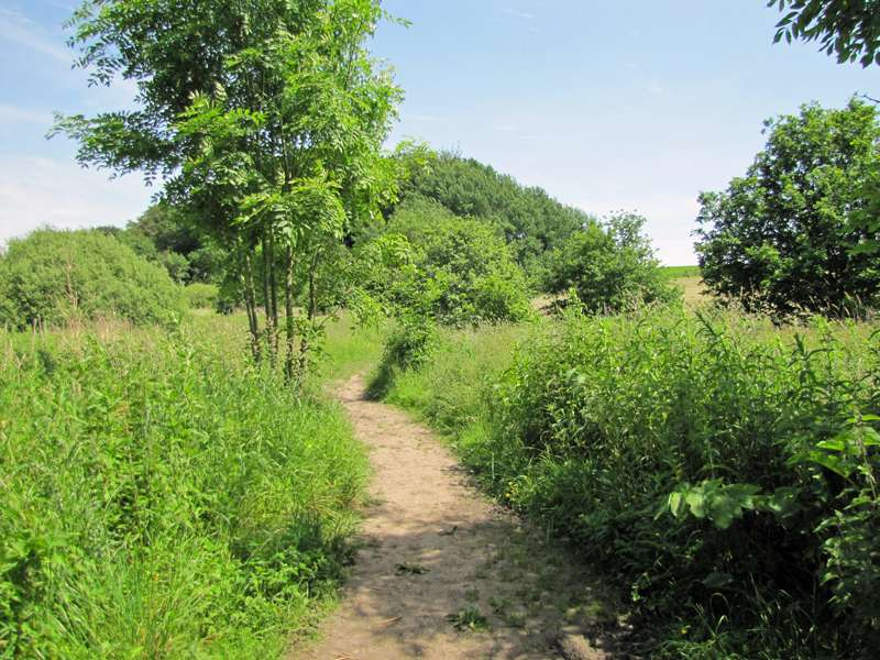 Halboffene Landschaft im Naturschutzgebiet Oelbachtal; Foto: 07.06.2014, Dortmund-Bövinghausen