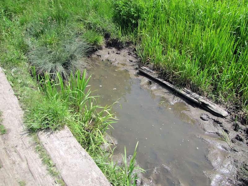 Sumpfige Stellen am Stenbocksiepen bieten Libellen und Amphibien ideale Lebensbedingungen; Foto: 07.06.2014, Dortmund-Bövinghausen