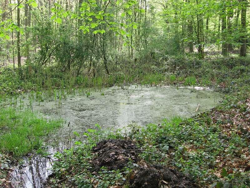 Tümpel im Aaper Wald; Foto 27.04.2008, Düsseldorf-Rath
