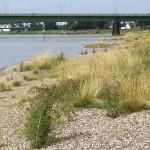 Rheinufer Hamm