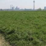 Rheinufer Lausward