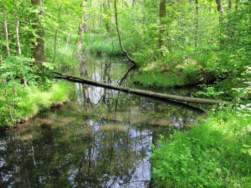Tümpel im Eller Forst; 16.05.2010; Düsseldorf-Unterbach