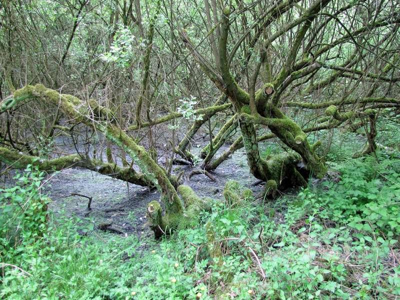 Feuchter Waldboden im Eller Forst; Foto: 16.05.2010, Düsseldorf-Unterbach