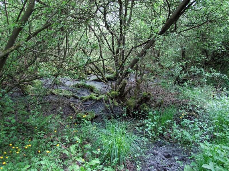 Sumpfiger Boden und verrottendes Holz im Eller Forst; Foto: 16.05.2010, Düsseldorf-Unterbach
