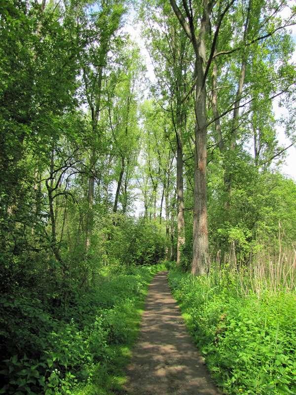 Waldweg im Eller Forst; Foto: 16.05.2010, Düsseldorf-Unterbach
