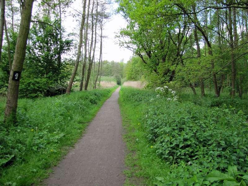 Blick auf den Weg durch die Feuchtwiese im Eller Forst; Foto: 16.05.2010, Düsseldorf-Unterbach