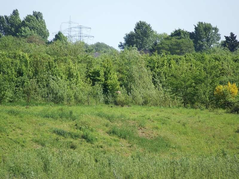 Wiese und Gebüsch nördlich des Düsseldorfer Flughafens; Foto: 11.05.2008, Düsseldorf-Kaiserswerth