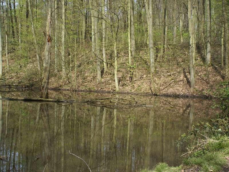 Tümpel im Grafenberger Wald im April; Foto: 20.04.2008, Düsseldorf-Ludenberg