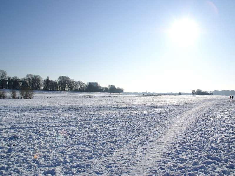 Rheinaue Hamm im Winter; Foto: 10.01.2009, Düsseldorf-Hamm