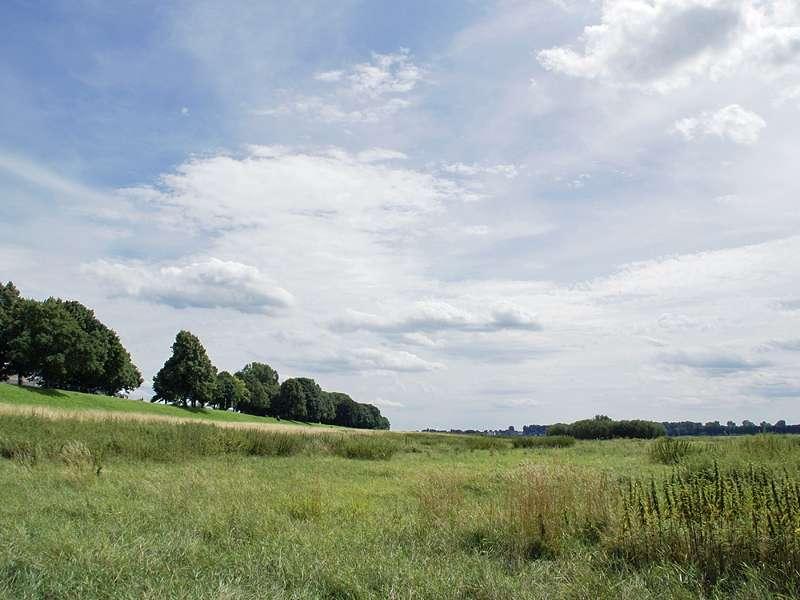 Blick über die Rheinaue in Düsseldorf-Hamm an einem Sommertag; Foto: 21.07.2009, Düsseldorf-Hamm