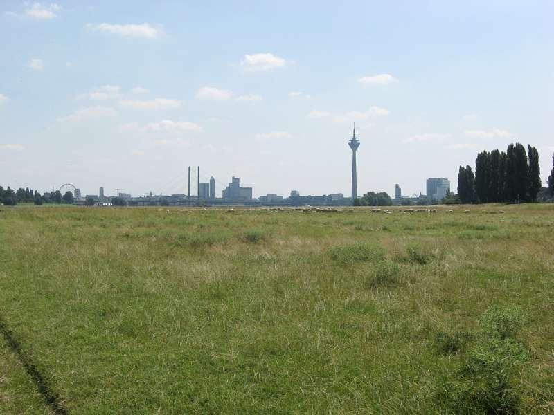 Blick über eine Schafweide zur Innenstadt am Rheinufer Lausward; Foto: 05.07.2008, Düsseldorfer Hafen