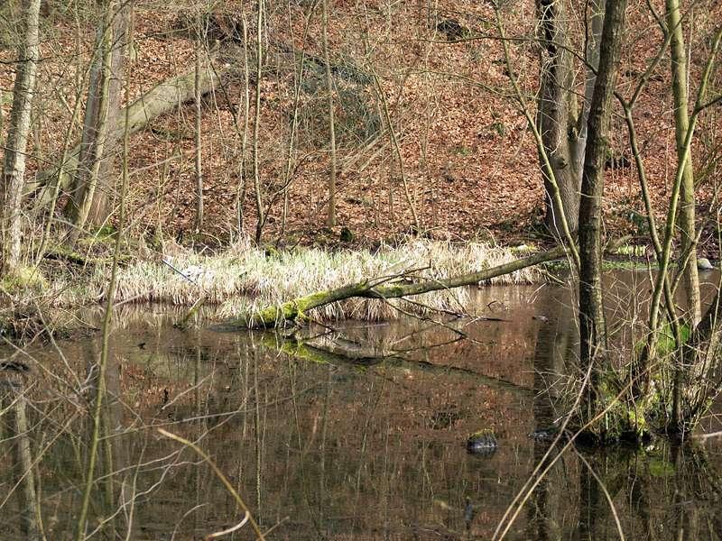 Quellteich im NSG Pillebachtal im Spätwinter; Foto: 11.03.2009, Düsseldorf-Ludenberg