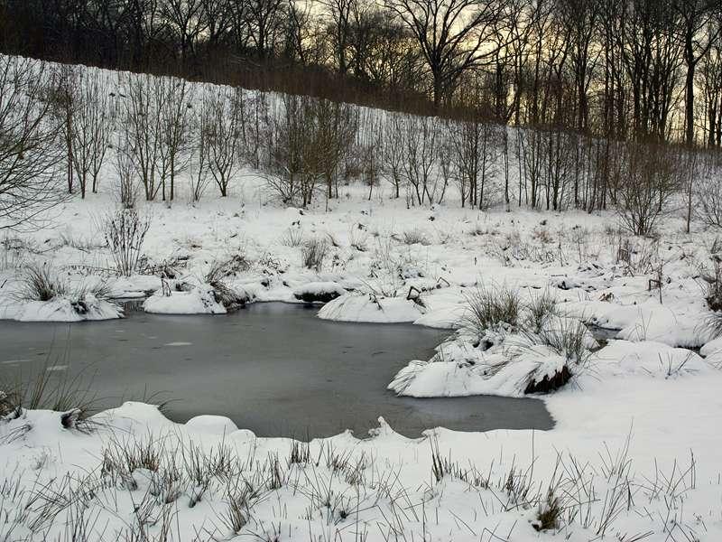 Feuchtbiotop im NSG Pillebachtal im Winter; Foto: 31.01.2010, Düsseldorf-Ludenberg