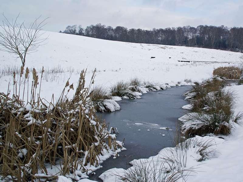 Eis und Schnee im NSG Pillebachtal; Foto: 31.01.2010, Düsseldorf-Ludenberg