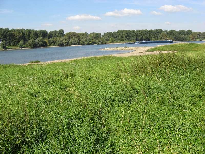 Rheinufer mit Wiese in der Urdenbacher Kämpe; Foto: 26.09.2008, Düsseldorf-Urdenbach