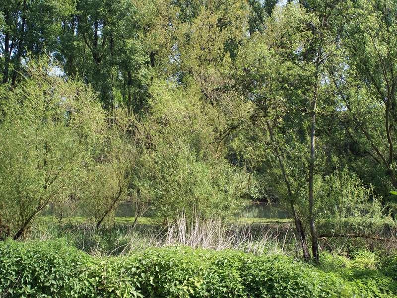 Altrhein hinter Bäumen; Foto: 10.05.2008, Düsseldorf-Garath