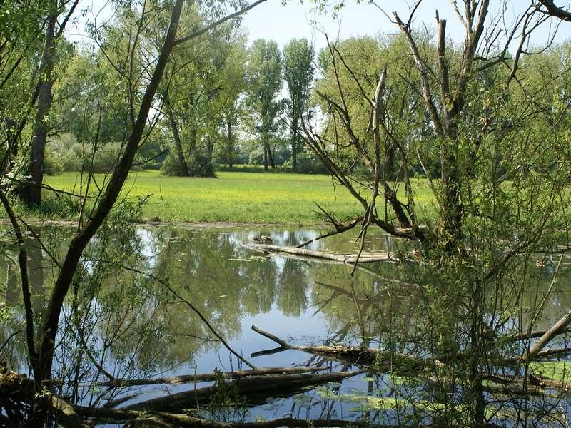 Gewässer im Naturschutzgebiet Urdenbacher Kämpe; Foto: 10.05.2008, Düsseldorf-Garath