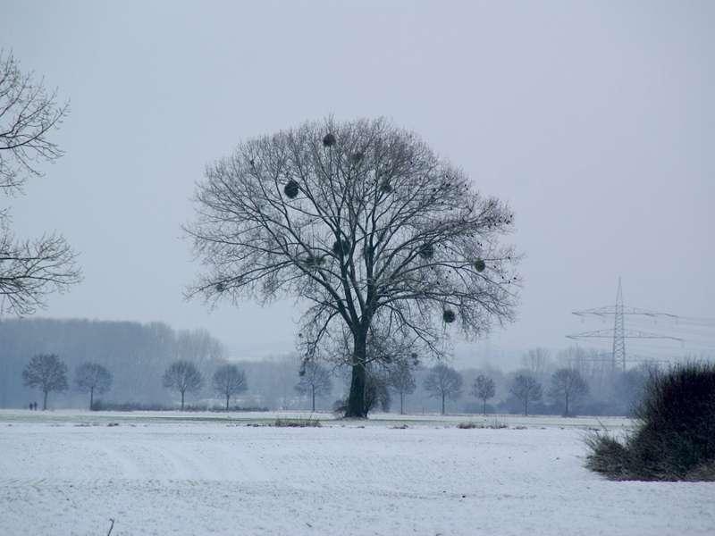 Winterlandschaft in der Urdenbacher Kämpe; Foto: 03.01.2010, Düsseldorf-Urdenbach