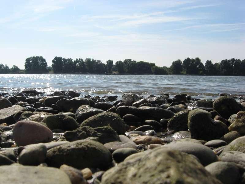 Mit dem Rhein auf Augenhöhe; Foto: 31.08.2008, Düsseldorf-Volmerswerth