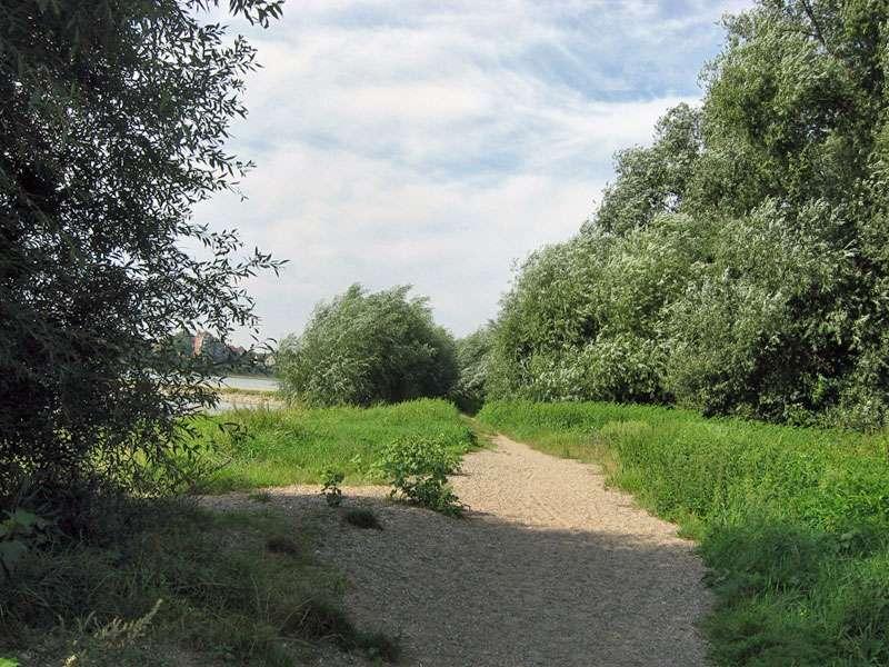 Weg am Rheinufer bei Düsseldorf-Volmerswerth; Foto: 31.08.2008, Düsseldorf-Volmerswerth