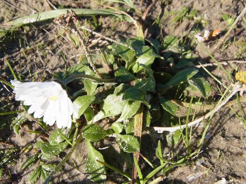 Unbestimmte Pflanzenart Nr. 3; Foto: 27.10.2012, NSG Leyhörn/Krummhörn