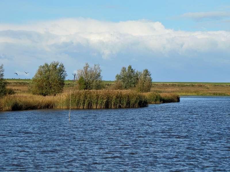 Auf dem Speicherbecken im Naturschutzgebiet Leyhörn; Foto: 28.10.2012, NSG Leyhörn/Krummhörn