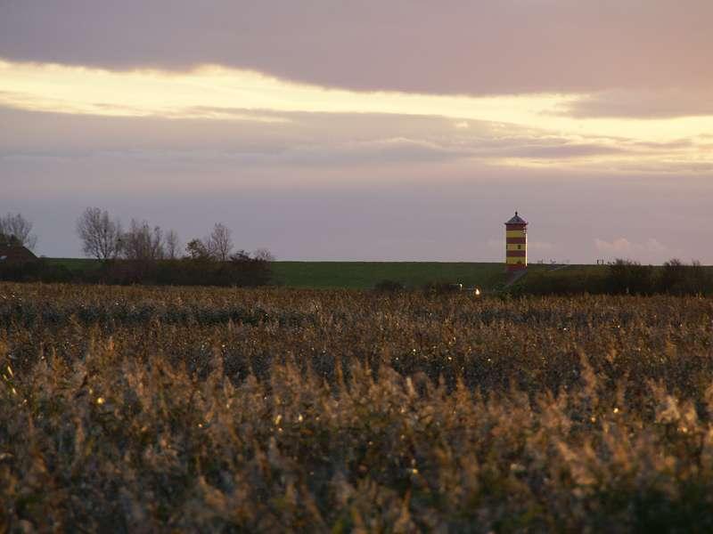 Röhrichtlandschaft an den Kleipütten und der Pilsumer Leuchtturm; Foto: 30.10.2012, Hauen/Krummhörn