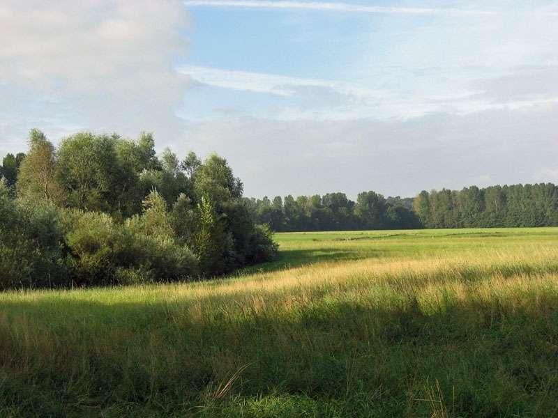 Wiesenlandschaft im Naturschutzgebiet Bislicher Insel; Foto: 12.09.2009, Xanten