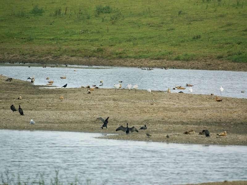 Wasservögel an einer der Flutmulden im NSG Bislicher Insel; Foto: 12.09.2009, Xanten