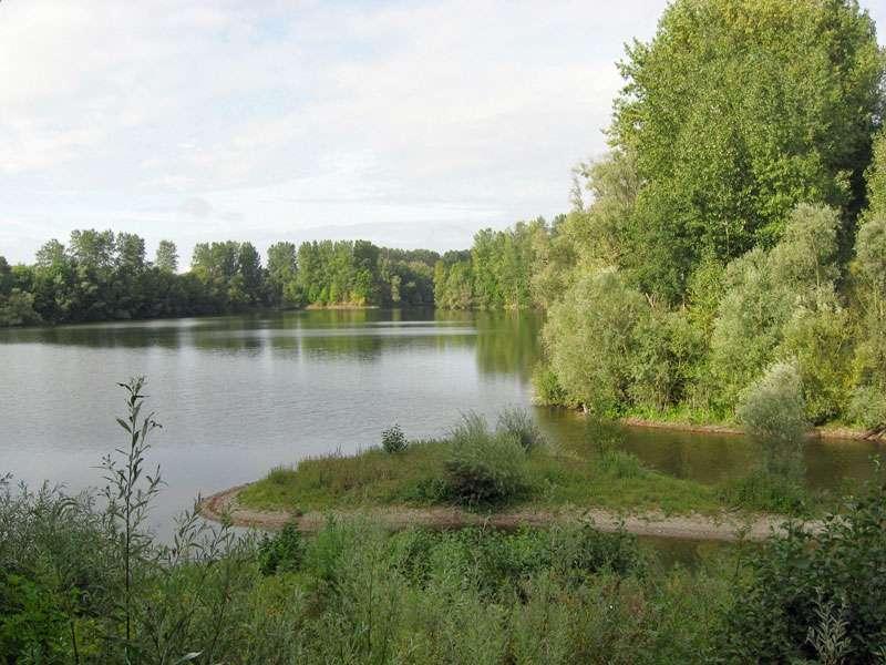 Teich im Naturschutzgebiet Bislicher Insel; Foto: 12.09.2009, Xanten
