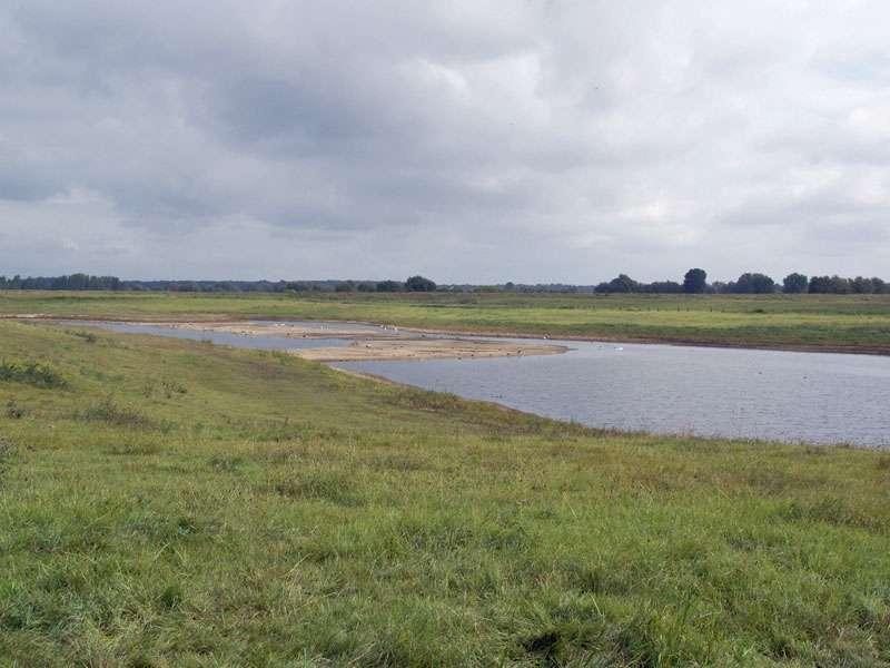 Flutmulde in der Nähe des Rheins im Naturschutzgebiet Bislicher Insel; Foto: 12.09.2009, Xanten