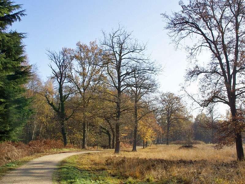 Halboffene Landschaft im Elmpter Schwalmbruch; Foto: 08.11.2009, Niederkrüchten