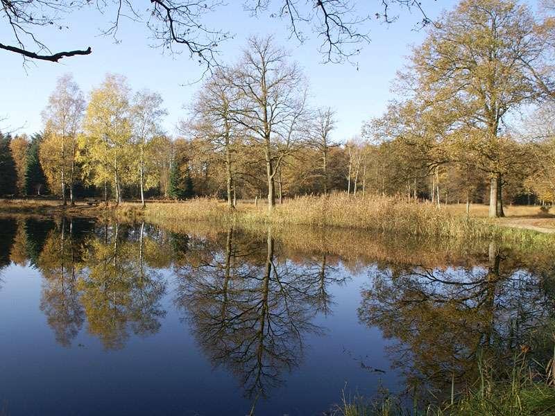 Tümpel und Feuchtwiese im Herbst im Elmpter Schwalmbruch; Foto: 08.11.2009, Niederkrüchten