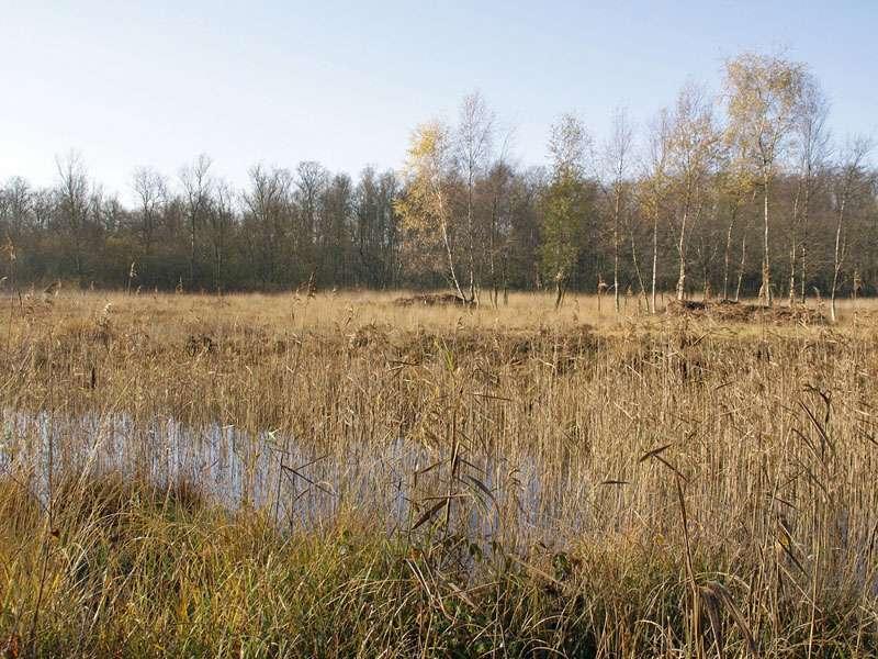 Im Herbst ist es relativ ruhig an den Gewässern im Elmpter Schwalmbruch; Foto: 08.11.2009, Niederkrüchten