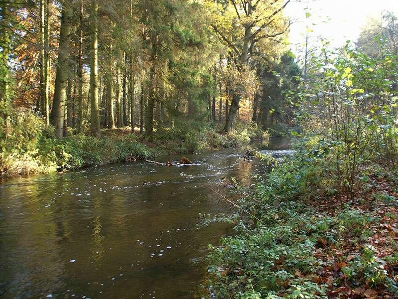 Die Schwalm im Elmpter Schwalmbruch; Foto: 08.11.2009, Niederkrüchten