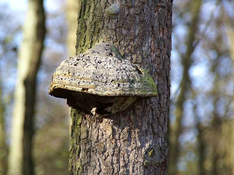 Unbestimmte Pilzart Nr. 3 aus dem Elmpter Schwalmbruch; Foto: 08.11.2009, Niederkrüchten