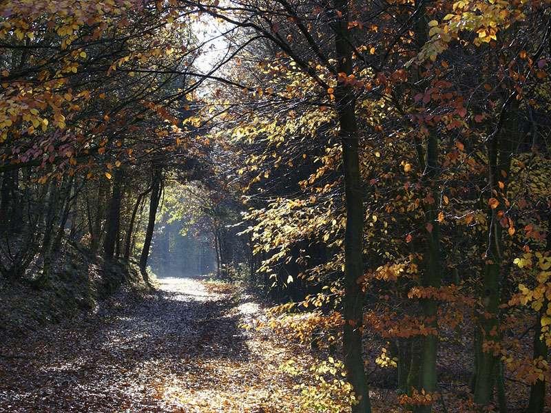 Herbstwald im Elmpter Schwalmbruch; Foto: 08.11.2009, Niederkrüchten